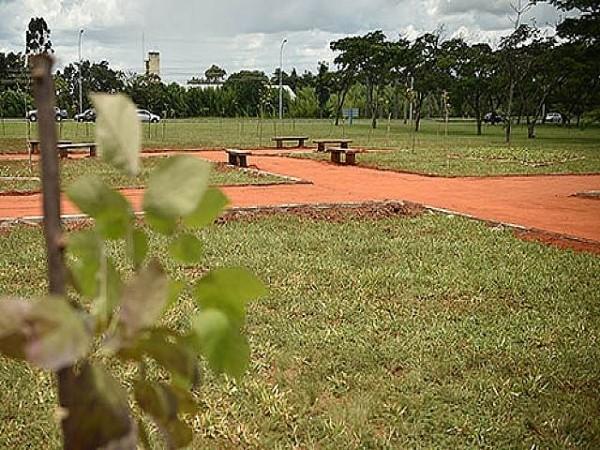 Espaço é um dos quatro locais que comporão o projeto Brasília Capital do Ipê. Foto: Andre Borges/Agência Brasília